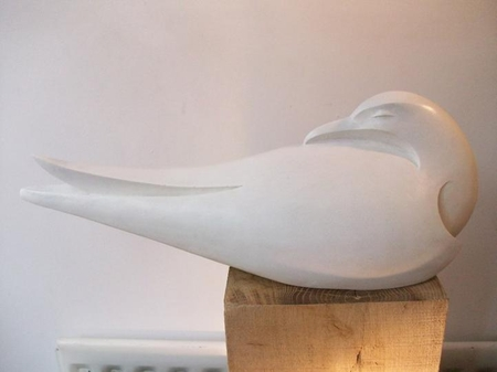 Tern Asleep  - click to visit artists gallery ->